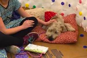 Girl petting a relaxed dog